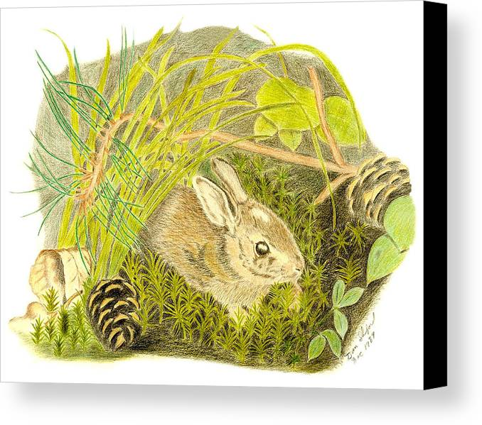 Rabbit Canvas Print featuring the drawing Baby Bunny Down For The Night by Daniel Shuford