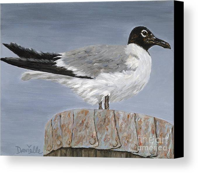 Seagull Canvas Print featuring the painting Bimini Gull by Danielle Perry
