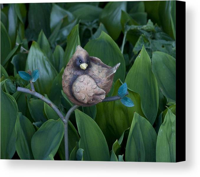 Photography Canvas Print featuring the photograph Birdie by Bill Ades