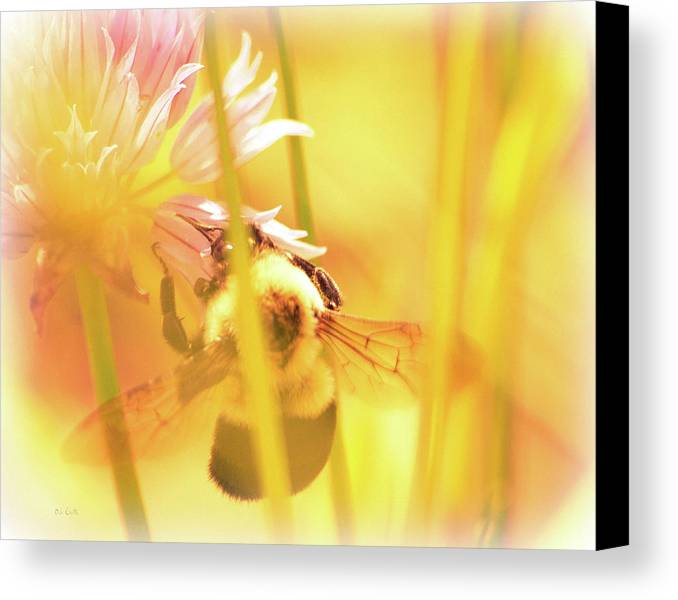 Bees Canvas Print featuring the photograph Fame Is A Bee by Bob Orsillo