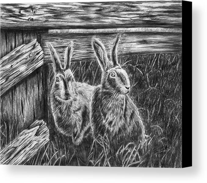 Hare Line Canvas Print featuring the drawing Hare Line by Peter Piatt