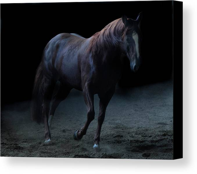 Horse Canvas Print featuring the photograph In The Shadows Vi by Eleszabeth McNeel