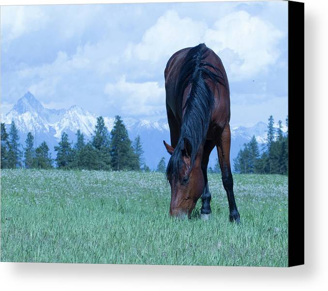 Mountains Canvas Print featuring the photograph Leaning Horse by Eleszabeth McNeel