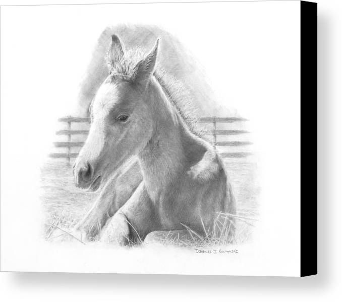 Horse Canvas Print featuring the drawing Lily by Douglas Kochanski