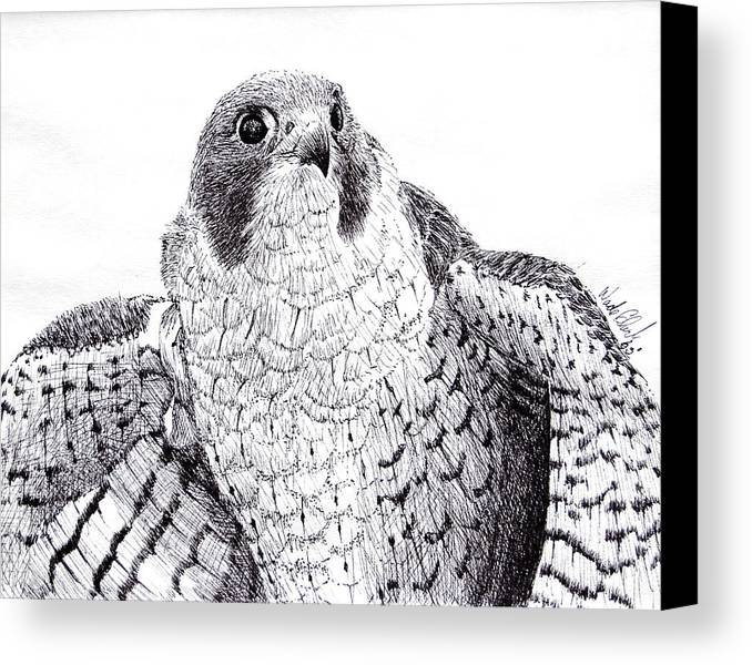 Wildlife Canvas Print featuring the drawing Peregrine Falcon by Wade Clark