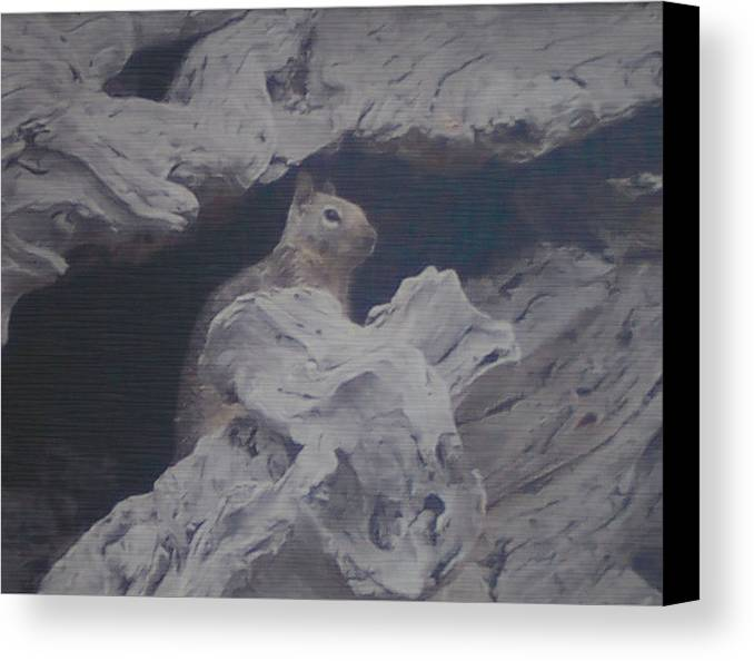 Squirrel Canvas Print featuring the photograph Silent Observer by Pharris Art