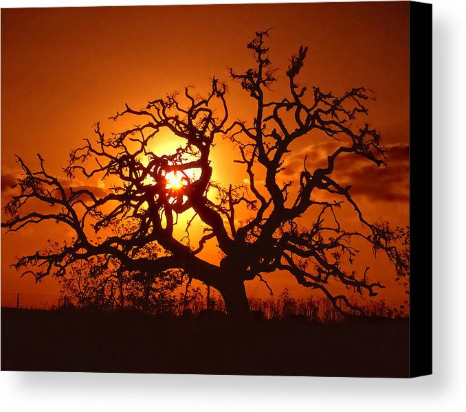 Spooky Canvas Print featuring the photograph Spooky Tree by Stephen Anderson
