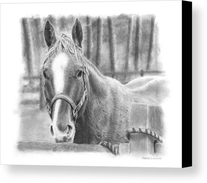 Horse Canvas Print featuring the drawing Watching You by Douglas Kochanski