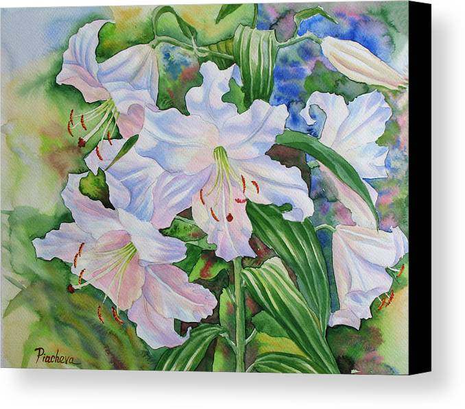 Watercolor Canvas Print featuring the painting White Lily. 2007 by Natalia Piacheva