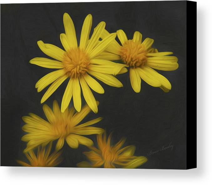 Flower Canvas Print featuring the photograph Yellow Daisy by Bruce Bouley