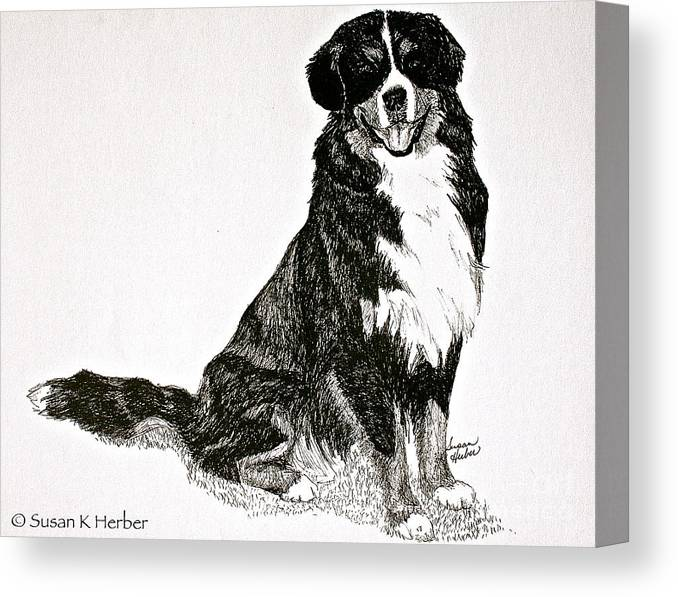 Bernese Mountain Dog Canvas Print featuring the drawing Beaming Berner by Susan Herber