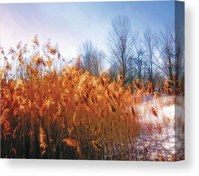 Cattails Canvas Print featuring the photograph Enchanted Forest 2 by The Art of Marsha Charlebois