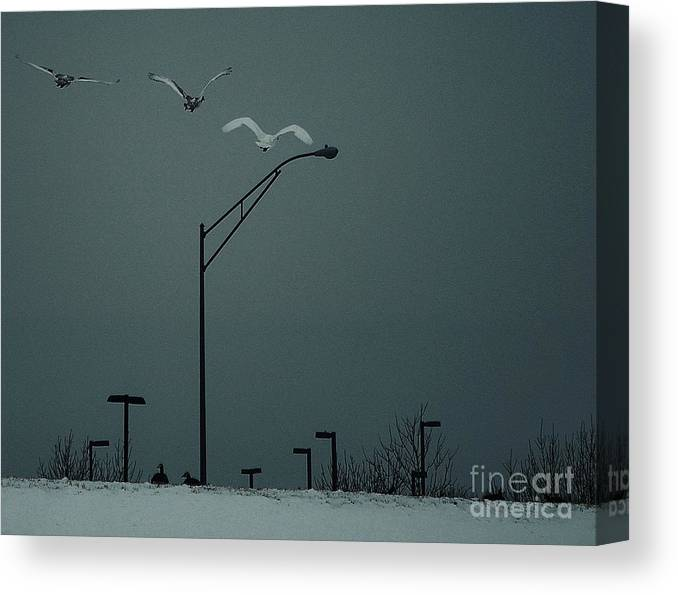 Swan Canvas Print featuring the photograph First Flight With Mom by Joy Bradley