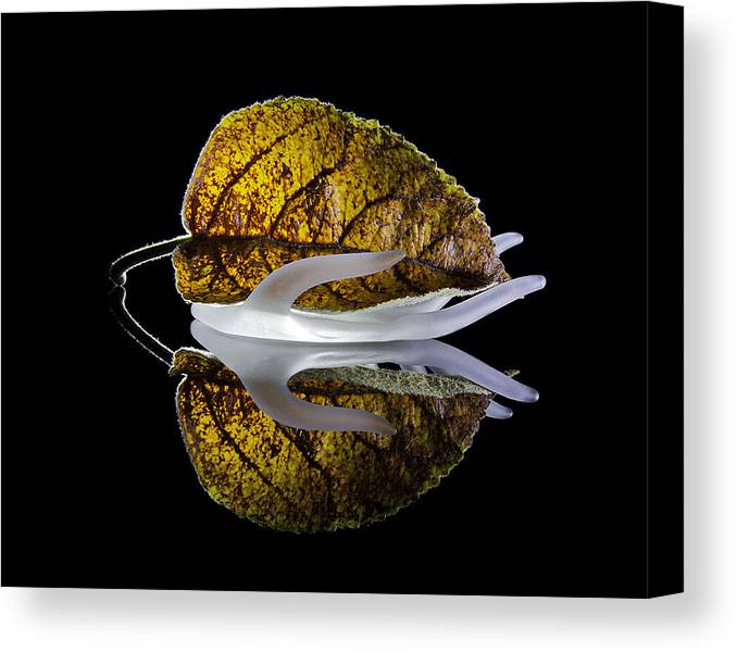 Fall Foliage Canvas Print featuring the photograph Handling Fall by Scott Moss