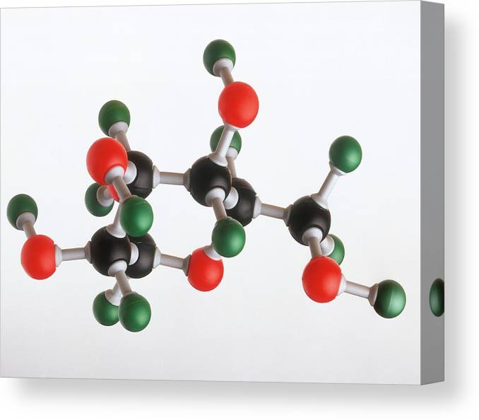 Atom Canvas Print featuring the photograph Model Of A Glucose Molecule by Dorling Kindersley/uig