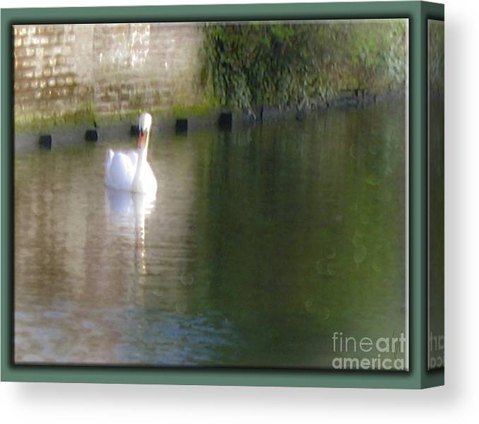 Swan In The Canal Canvas Print featuring the photograph Swan In The Canal by Victoria Harrington