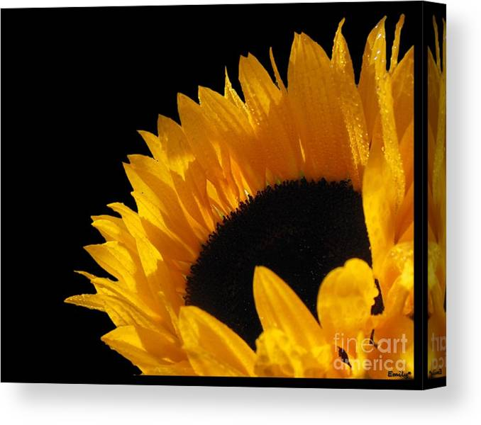 Image Of A Sunflower Canvas Print featuring the photograph You Are My Sunshine by Emily Muzak and Art