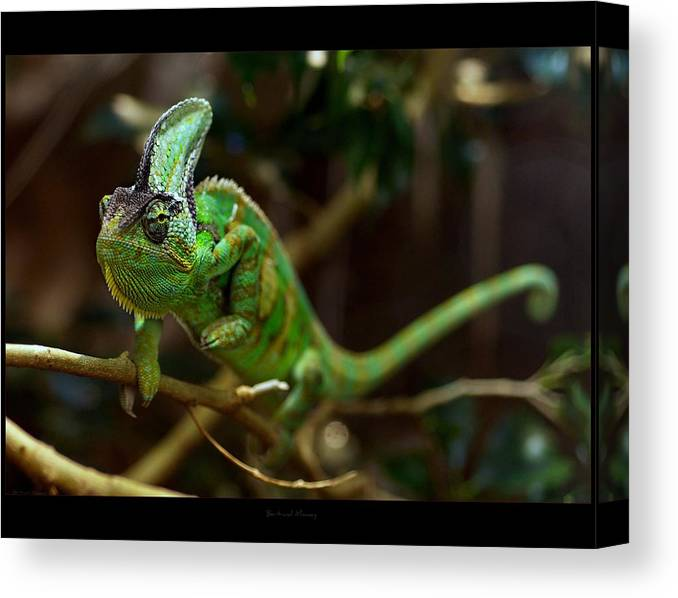 Horizontal Canvas Print featuring the photograph Chameleon by 1d110
