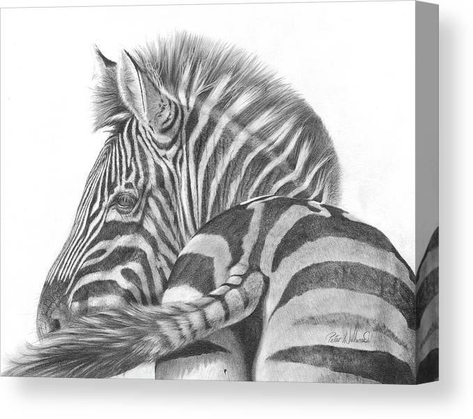 Zebra Canvas Print featuring the drawing A Watchful Eye by Peter Williams