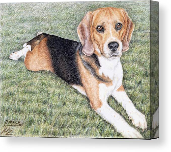 Dog Canvas Print featuring the drawing Beagle by Nicole Zeug