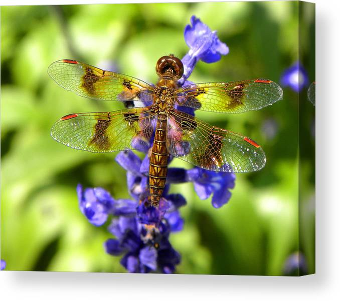 Dragonfly Canvas Print featuring the photograph Dragonfly by Sandi OReilly