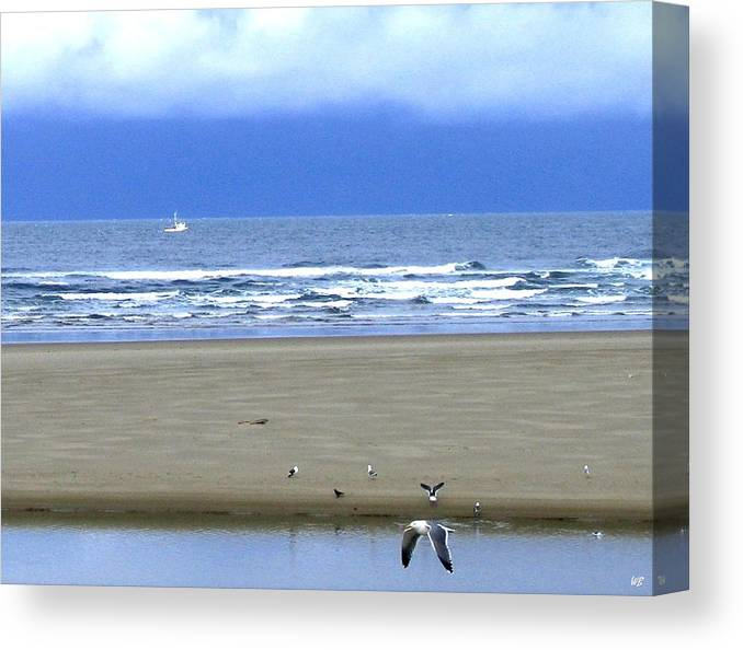 Seagull Canvas Print featuring the photograph Flaps Down by Will Borden