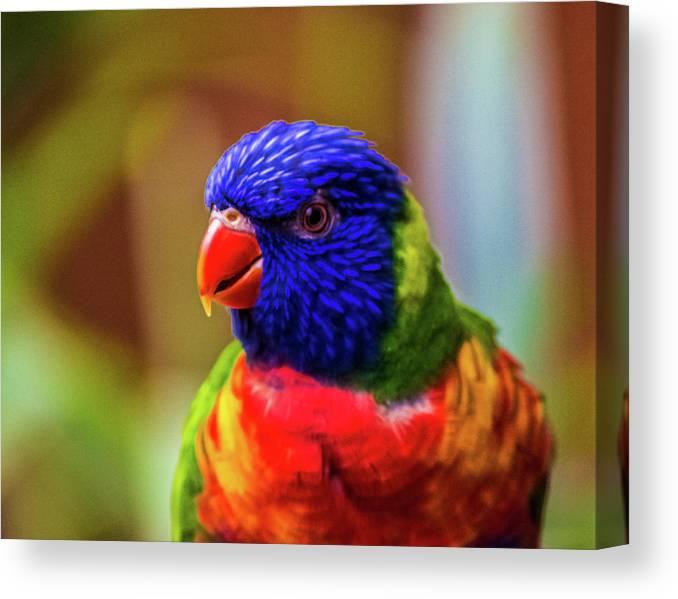 Rainbow Lorikeet Canvas Print featuring the photograph Rainbow Lorikeet by Martin Newman