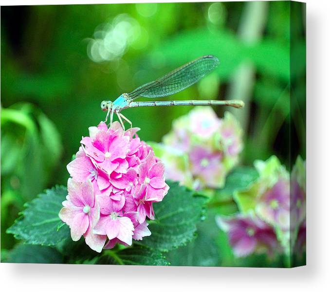 Dragonfly Canvas Print featuring the photograph Turquiose Dragonfly And Hydrangea by Heather S Huston