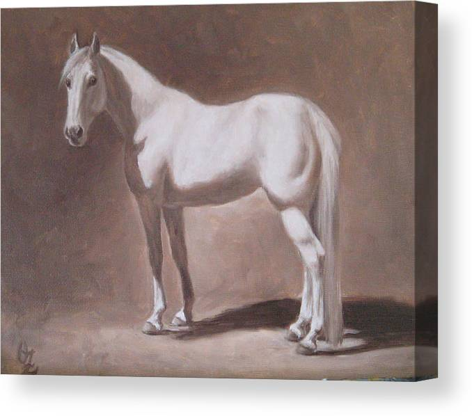 Horse Canvas Print featuring the painting White Horse Study by Oksana Zotkina