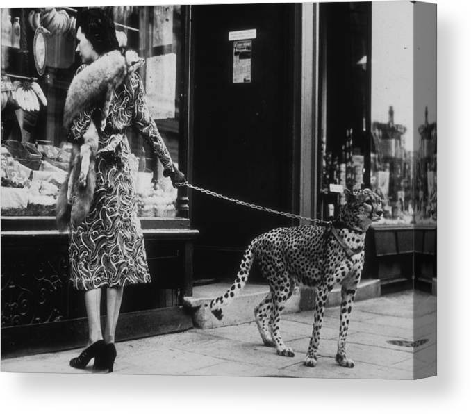 Pets Canvas Print featuring the photograph Cheetah Who Shops by B. C. Parade
