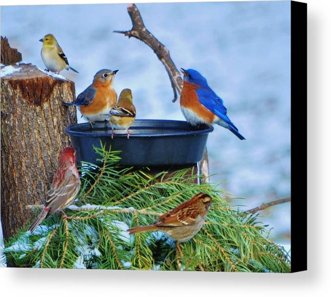 Birds Canvas Print featuring the photograph Live In Harmony by William Fox
