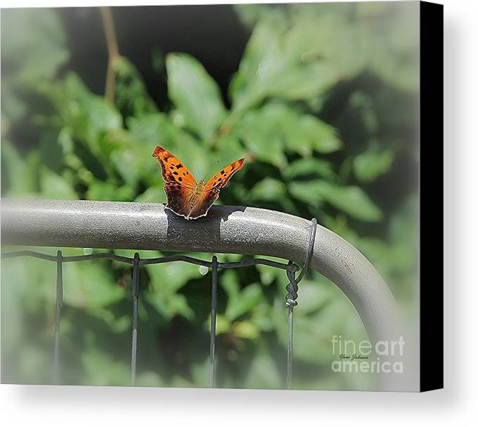 Question Mark Butterfly Canvas Print featuring the photograph Question Mark Butterfly by Yumi Johnson