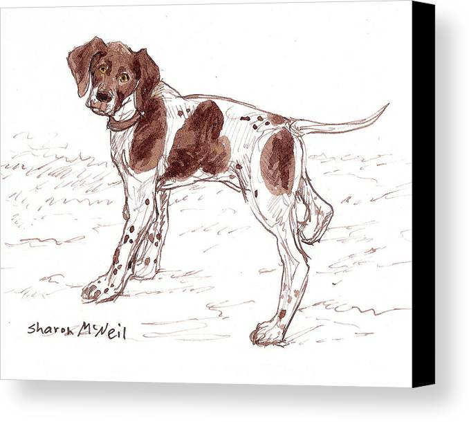 Dog Canvas Print featuring the drawing Ready To Play by Sharon McNeil