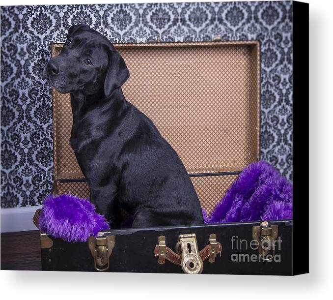 Canvas Print featuring the photograph Abby by Alana Ranney