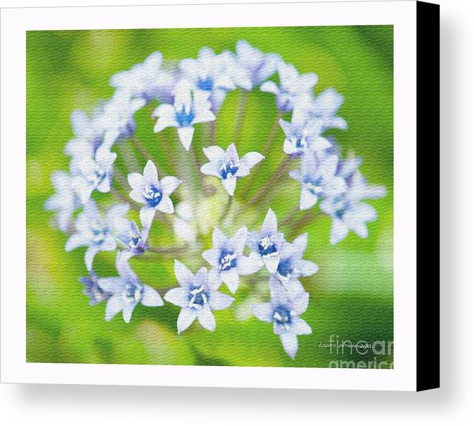 Agapantha Purple Flowers Canvas Print featuring the photograph Agapantha Purple Flowers by Artist and Photographer Laura Wrede