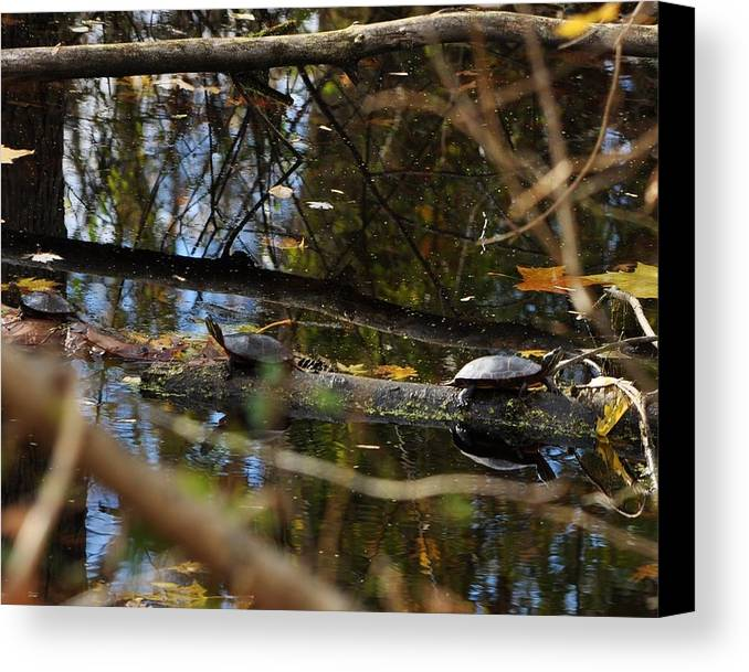 Water Turtles Canvas Print featuring the photograph Autumn On The Canal by William Fox