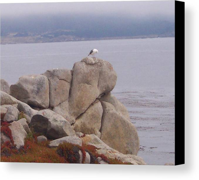 Bird Canvas Print featuring the photograph Bird On A Rock by Pharris Art