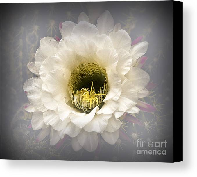 Background Canvas Print featuring the photograph Cactus Bloom by Arne Hansen