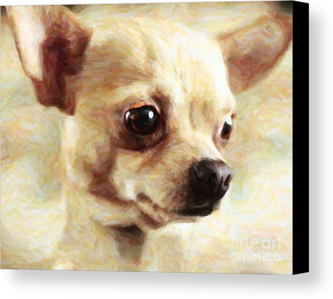 Animal Canvas Print featuring the photograph Chihuahua Dog - Painterly by Wingsdomain Art and Photography
