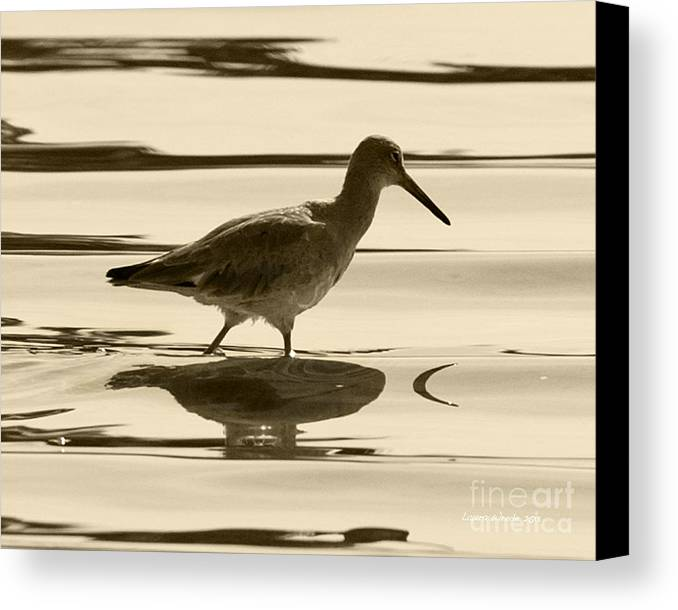 Gaviota Canvas Print featuring the photograph Early Morning In The Moss Landing Harbor Picture Of A Willet by Artist and Photographer Laura Wrede