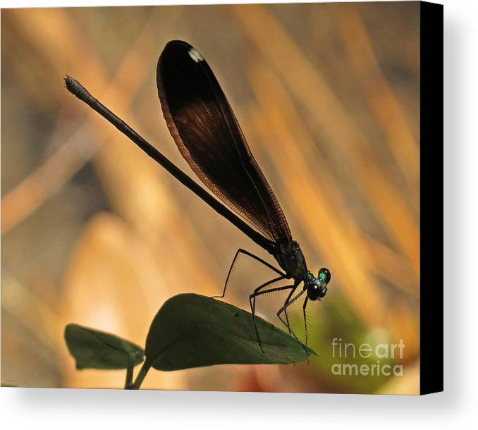 Nature Canvas Print featuring the photograph Ebony Damselfly by Deborah Smith