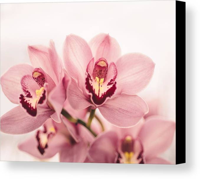 Flower Canvas Print featuring the photograph Enchanting by Nastasia Cook