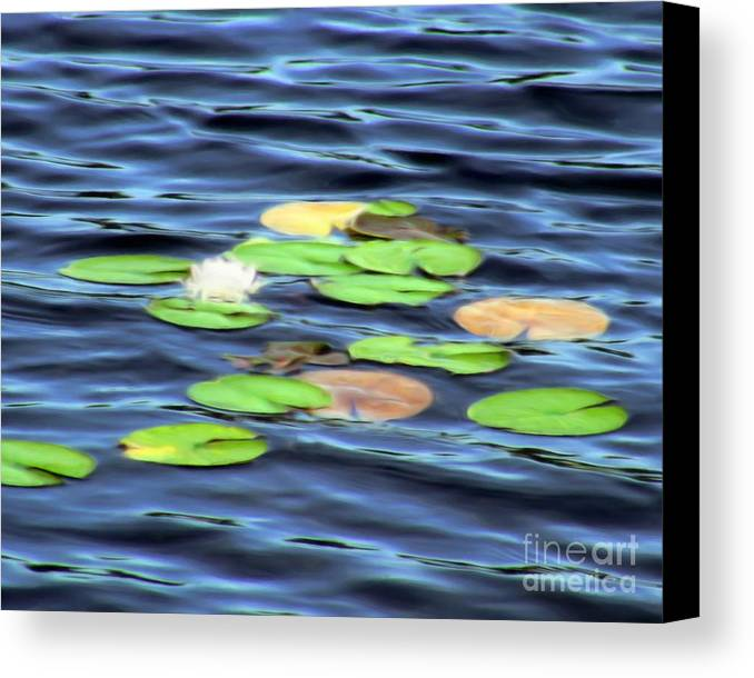 Water Canvas Print featuring the painting Evening Lake With Water Lily by Pet Serrano