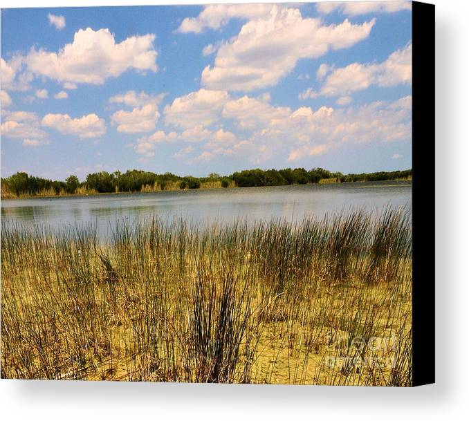 Everglades Canvas Print featuring the photograph Everglades Pond by David Call