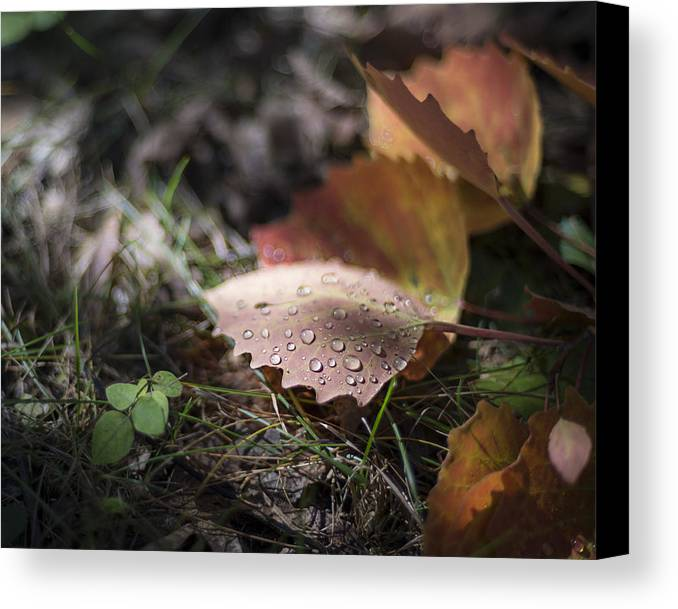 Aspen Canvas Print featuring the photograph Leaves Of The Aspen by Tim Radl