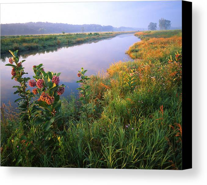 Sunset Canvas Print featuring the photograph Milk Weed Morning by Ray Mathis