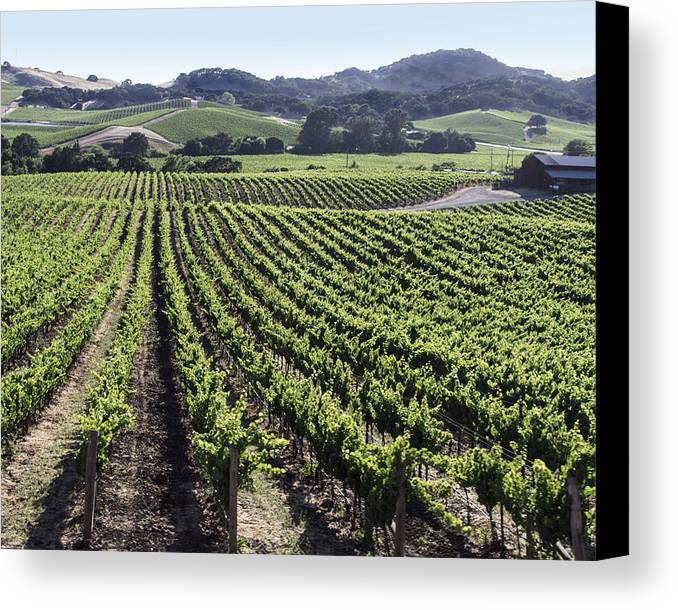 Napa Canvas Print featuring the photograph Napa Valley Vineyard by Dee Savage