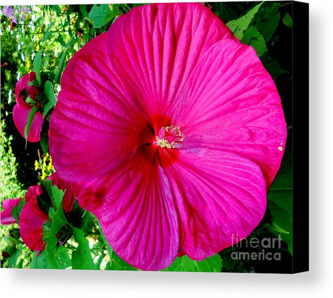 Pink Canvas Print featuring the painting Pink And Pretty by Patricia Bunk