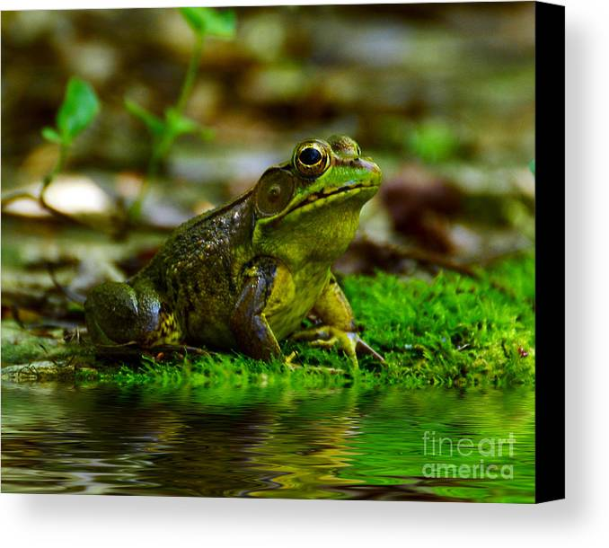 Frog Canvas Print featuring the photograph Resting In The Shade by Kathy Baccari