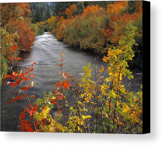 Idaho Scenics Canvas Print featuring the photograph River Color by Leland D Howard